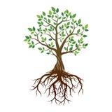 Δέντρο και ρίζες χρώματος επίσης corel σύρετε το διάνυσμα απεικόνισης Στοκ εικόνα με δικαίωμα ελεύθερης χρήσης