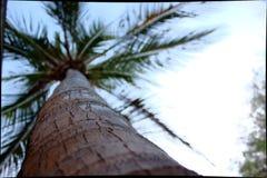δέντρο καρύδων κάτω Στοκ Φωτογραφία