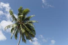 δέντρο 2 καρύδων στοκ φωτογραφία