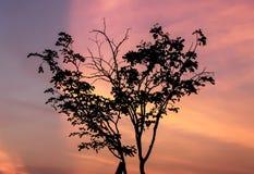δέντρο κατά τη διάρκεια του ηλιοβασιλέματος Στοκ Εικόνες