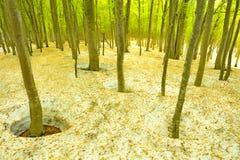 δέντρο καλά και νέος πράσινος Στοκ Εικόνα