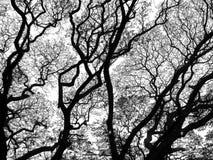 δέντρο κλάδων Στοκ εικόνες με δικαίωμα ελεύθερης χρήσης