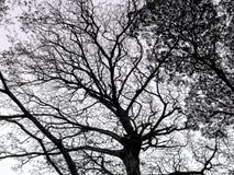 δέντρο κλάδων Στοκ Φωτογραφία