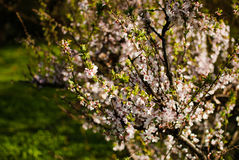 δέντρο κλάδων Στοκ εικόνα με δικαίωμα ελεύθερης χρήσης