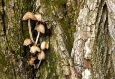 δέντρο μανιταριών Στοκ Εικόνες