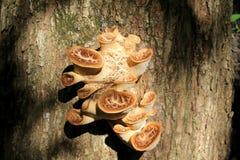 δέντρο μανιταριών Στοκ Φωτογραφίες