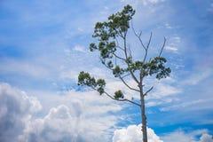 δέντρο μπλε ουρανού Στοκ Φωτογραφίες