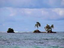 δέντρο νησιών καρύδων Στοκ Φωτογραφίες