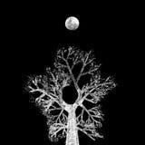 Δέντρο νύχτας Στοκ φωτογραφίες με δικαίωμα ελεύθερης χρήσης