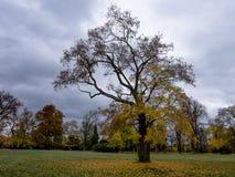 δέντρο πάρκων φθινοπώρου αλεών στοκ εικόνα με δικαίωμα ελεύθερης χρήσης