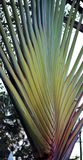 δέντρο πάρκων φοινικών Στοκ φωτογραφίες με δικαίωμα ελεύθερης χρήσης