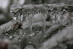 δέντρο πεύκων πάγου Στοκ εικόνα με δικαίωμα ελεύθερης χρήσης