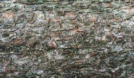 δέντρο πεύκων φλοιών Στοκ εικόνα με δικαίωμα ελεύθερης χρήσης