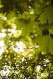 δέντρο πεδίων Στοκ Εικόνα