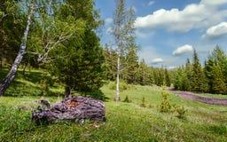 δέντρο πεδίων Στοκ Φωτογραφία
