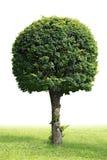 δέντρο που απομονώνεται Στοκ φωτογραφία με δικαίωμα ελεύθερης χρήσης