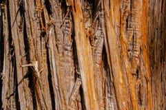 δέντρο που ξεπερνιέται Στοκ Εικόνες