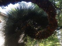 δέντρο που στρίβεται Στοκ Φωτογραφία