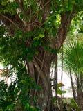 δέντρο που τυλίγεται Στοκ εικόνες με δικαίωμα ελεύθερης χρήσης