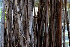 δέντρο ρίζας Στοκ φωτογραφίες με δικαίωμα ελεύθερης χρήσης