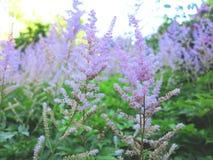 δέντρο ριζών ιδιαιτερότητας φύσης ομορφιάς Στοκ φωτογραφίες με δικαίωμα ελεύθερης χρήσης