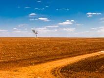 δέντρο σε ένα κατεστραμμένο έδαφος τομέων στοκ φωτογραφίες με δικαίωμα ελεύθερης χρήσης