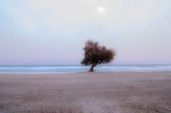 δέντρο σε μια παραλία στο ηλιοβασίλεμα Στοκ Φωτογραφίες