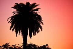 δέντρο σκιαγραφιών φοινι&kapp Στοκ Εικόνες