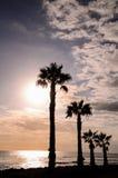 δέντρο σκιαγραφιών φοινι&kapp Στοκ Εικόνα