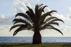 δέντρο σκιαγραφιών φοινι&kapp Στοκ Φωτογραφίες