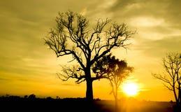 Δέντρο στο ηλιόλουστο sunsrt Στοκ φωτογραφία με δικαίωμα ελεύθερης χρήσης