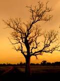 Δέντρο στο ηλιόλουστο sunsrt Στοκ Εικόνα