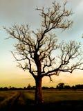 Δέντρο στο ηλιόλουστο sunsrt Στοκ εικόνες με δικαίωμα ελεύθερης χρήσης