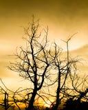 Δέντρο στο ηλιόλουστο sunsrt Στοκ εικόνα με δικαίωμα ελεύθερης χρήσης