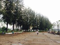Δέντρο στο πανεπιστήμιο σε Khonkaen από με στο τηλέφωνο Ι 5s Στοκ εικόνα με δικαίωμα ελεύθερης χρήσης