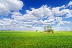 Δέντρο στο πεδίο Στοκ Εικόνες