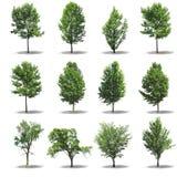 δέντρο συλλογής Στοκ φωτογραφία με δικαίωμα ελεύθερης χρήσης