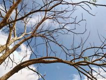 δέντρο σύννεφων Στοκ Εικόνα