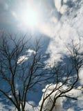 δέντρο σύννεφων Στοκ φωτογραφία με δικαίωμα ελεύθερης χρήσης
