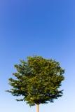 δέντρο τοπίου κήπων φθινοπώρου στοκ εικόνα με δικαίωμα ελεύθερης χρήσης