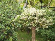 δέντρο τοπίου κήπων φθινοπώρου στοκ φωτογραφίες
