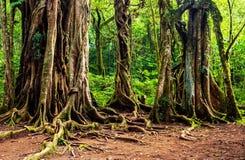 δέντρο τροπικό Στοκ φωτογραφίες με δικαίωμα ελεύθερης χρήσης