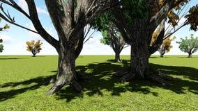 Δέντρο φελλού Amur απόθεμα βίντεο