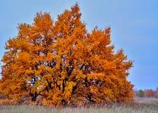 1 δέντρο φθινοπώρου στοκ φωτογραφία με δικαίωμα ελεύθερης χρήσης