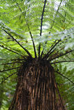 δέντρο φτερών Στοκ Φωτογραφίες