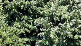 δέντρο φύλλων ανασκόπησης απόθεμα βίντεο