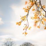 δέντρο φύλλων κίτρινο στοκ εικόνες με δικαίωμα ελεύθερης χρήσης