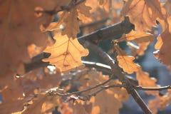 δέντρο φύλλων φθινοπώρου Ο πρώτος του Σεπτεμβρίου Στοκ Εικόνες