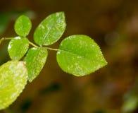 δέντρο φύλλων φθινοπώρου Στοκ Εικόνες
