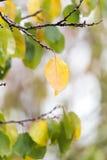 δέντρο φύλλων φθινοπώρου Στοκ φωτογραφίες με δικαίωμα ελεύθερης χρήσης